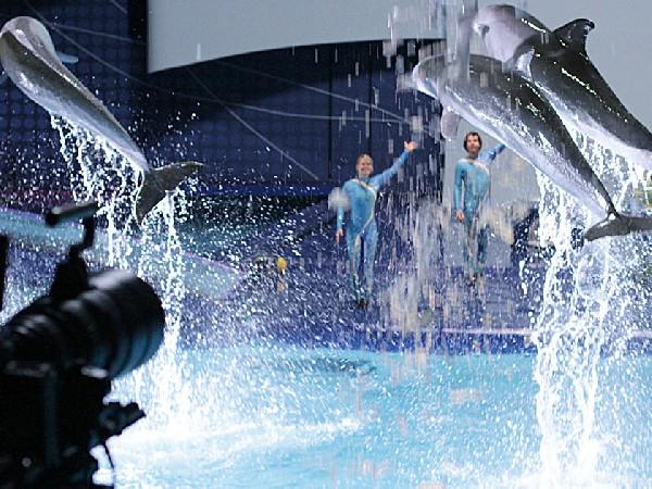 Dolfinarium: Aqua Bella